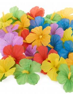 Hawaii-Blumen 24 Stück