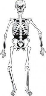 Wand-Skelett Halloween-Pappdeko weiss-schwarz 140cm