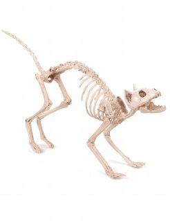 Knochenkatze Halloween-Dekotier weiss 60x12x25cm