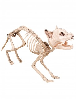 Katzen-Skelett Halloween-Deko weiss 60cm