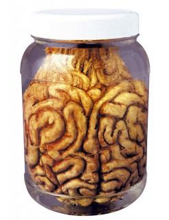 Eingelegtes Gehirn Schreckartikel Halloween Party-Deko bunt 14cm