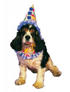 Clown Kostüm für Hunde bunt