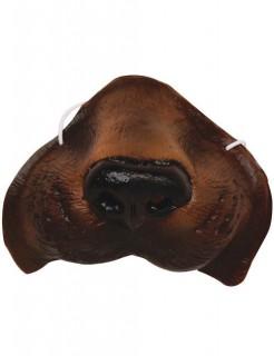 Hunde-Nase braun