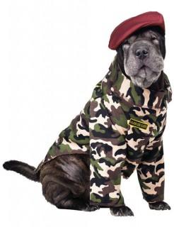 Soldat Offizier Hundekostüm camouflage