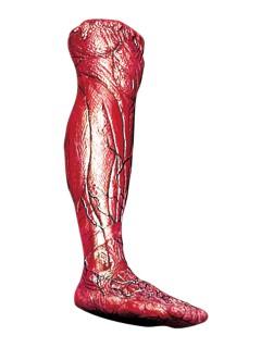 Gehäutetes rechtes Bein Leichenteil Halloween-Deko rot-blau 58x25x10cm
