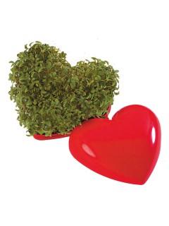 Herz mit Kresse-Samen rot 5x6x3,5cm