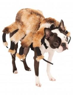 Gruselige Spinne Hundekostüm für Halloween braun