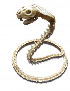 Kobra-Skelett Schlangen-Deko für Halloween beige 50 x 42 cm
