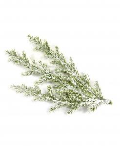 Verschneite Zypressen-Zweige Weihnachts-Dekoration 3 Stück grün-weiss 10 cm