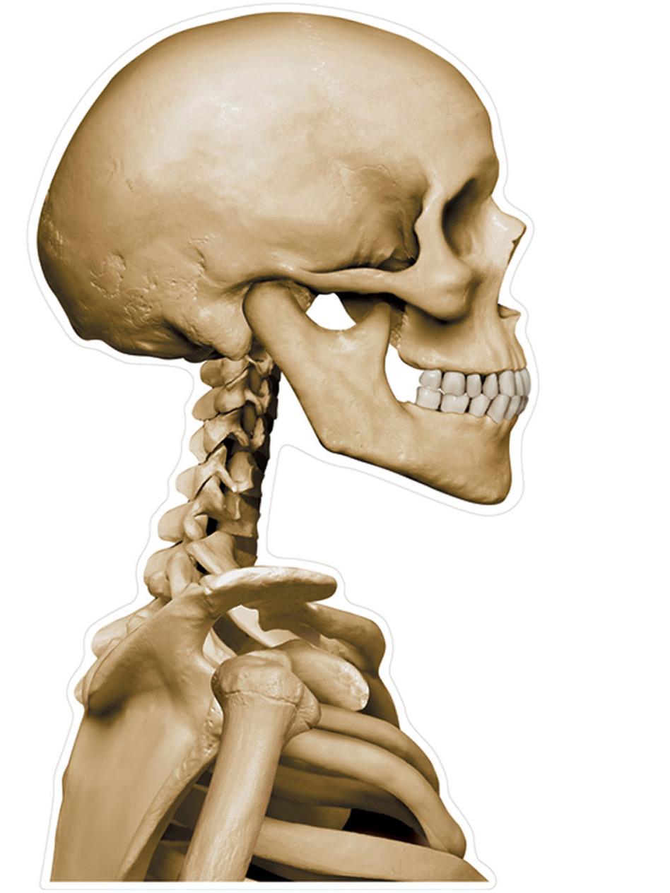 Skelett Totenschädel Auto-Aufkleber beige 30x43cm