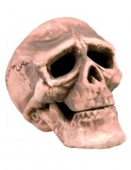 Totenschädel Halloween-Deko Skull beige 18x16x12cm