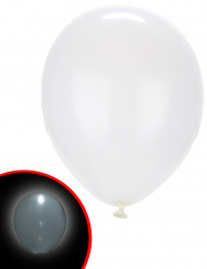 Luftballons LED Illooms 5 Stück weiss