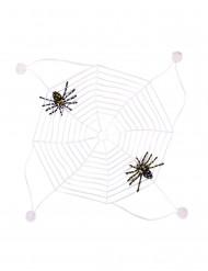 Spinnennetz mit Saugnäpfen nachtleuchtend transparent 27x27cm