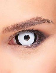 Sclera Kontaktlinsen Black