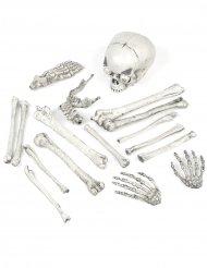 Knochen-Set Skelett Gebeine mit Leuchtaugen und Sound Halloween-Deko 18-teilig weiss 35x20x15cm
