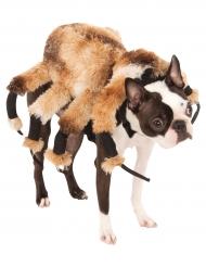 Halloween Kostume Hunde Gunstig