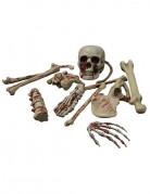 Skelettknochen mit Blutspritzern Halloweendeko 12-teilig beige-rot