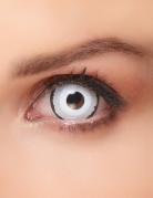 Sclera Kontaktlinsen Venus weiss-schwarz