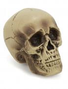Halloween Dekoration Totenschädel beige-schwarz 18cm